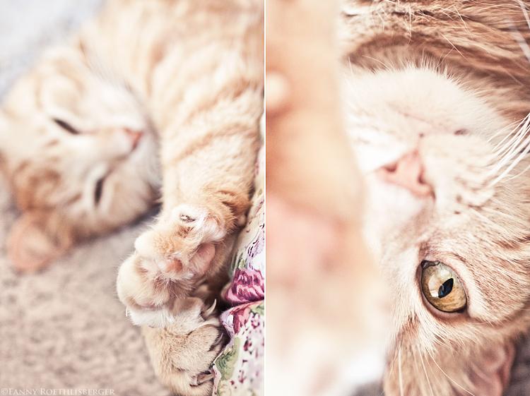 katten_web