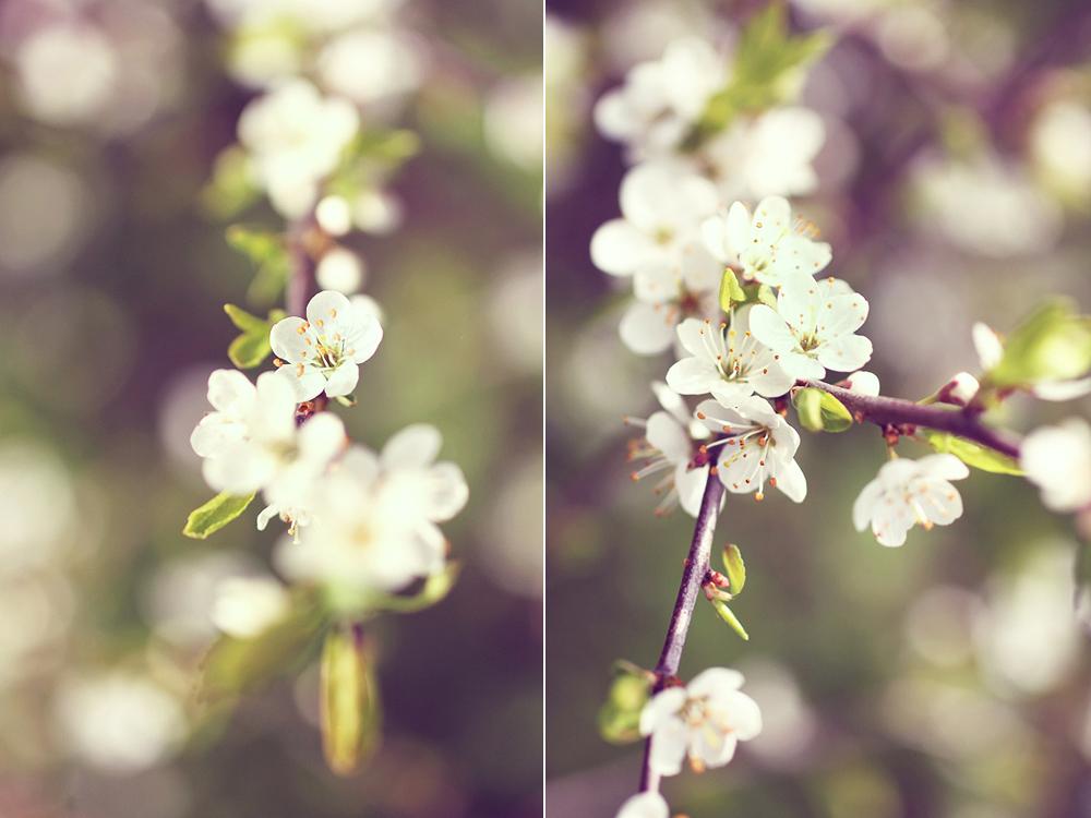 Två gamla bilder från en vår för många år sedan då jag fotade blommor mest hela tiden